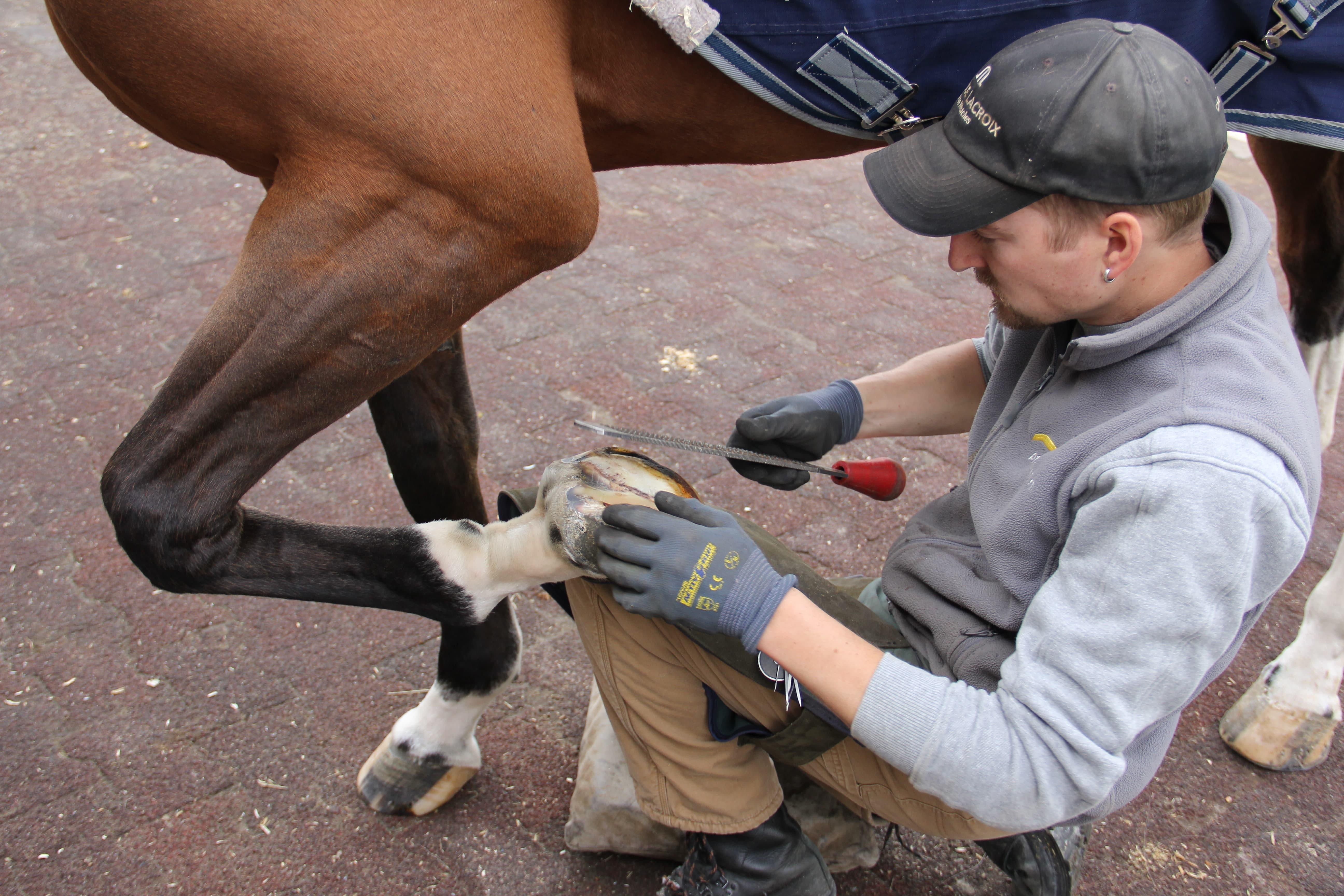 hufbeschlag-pferdereich-arbeiten